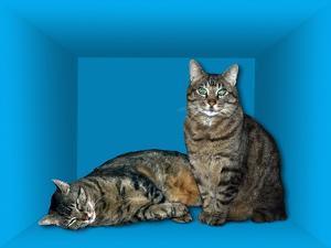 Schrodinger's Cat, Artwork by Victor De Schwanberg