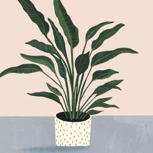 Houseplant IV by Victoria Borges