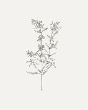 Wild Foliage Sketch I by Victoria Borges