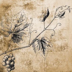 Grape Vine by Victoria Brown