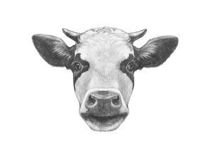 Portrait of Cow. Hand Drawn Illustration. by victoria_novak