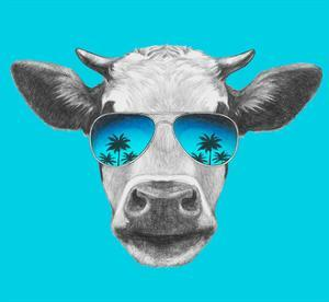 Portrait of Cow with Mirror Sunglasses. Hand Drawn Illustration. by victoria_novak