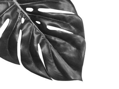 Tropical Leaf Monstera by VicW