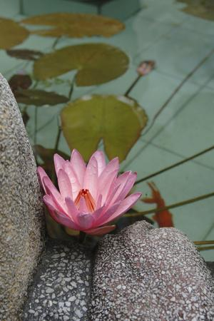 https://imgc.allpostersimages.com/img/posters/vietnam-water-lily-in-a-temple-pond-phouc-kien-assembly-hall_u-L-PU3DEM0.jpg?p=0