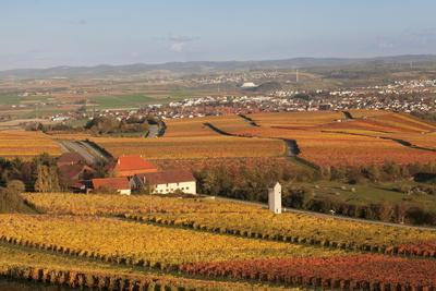 https://imgc.allpostersimages.com/img/posters/view-from-michaelsberg-mountain-over-autumn-vineyards-to-the-lowensteiner-berge-mountains_u-L-PQ8N3B0.jpg?p=0