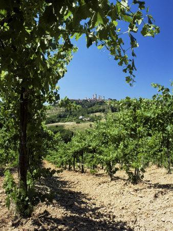 https://imgc.allpostersimages.com/img/posters/view-from-vineyard-of-the-town-of-san-gimignano-tuscany-italy_u-L-P1TG7L0.jpg?p=0