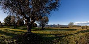 View of a field, Santa Eulalia De Roncana, Barcelona, Catalonia, Spain