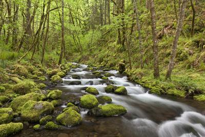 https://imgc.allpostersimages.com/img/posters/view-of-gorton-creek-columbia-river-gorge-oregon-usa_u-L-PN6MKT0.jpg?p=0