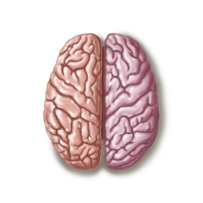 https://imgc.allpostersimages.com/img/posters/view-of-human-brain-from-the-top_u-L-PR6CDV0.jpg?p=0