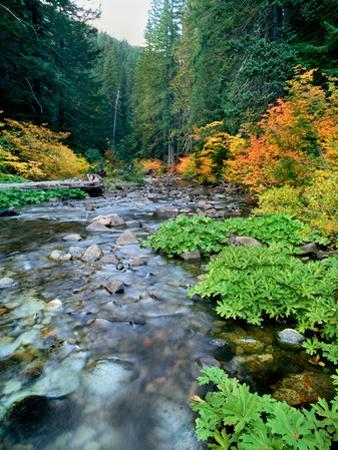 View of North Santiam River flowing through rocks, Willamette National Forest, Lane County, Oreg...