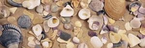 View of Seashells