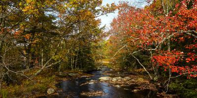 View of stream in fall colors, Maine, USA