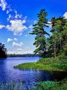 View of the Follensby Clear Pond, Adirondack Mountains, New York State, USA