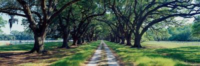 View of trees along the road, South Carolina, USA