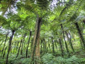 View of Vegetation in Bali Botanical Gardens, Bali, Indonesia