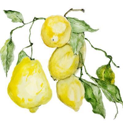 Branch of Ripe Sour Lemons