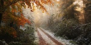 Frosty Fall by Vincent Croce