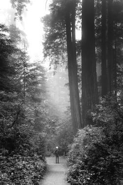 Among The Mighty Redwoods Humboldt National Park Coast Trail by Vincent James