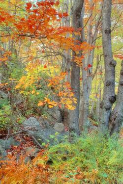 An Array of Fall Color, Maine Coast, New England by Vincent James