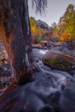 Atumn Oasis - Fall Color, Bishop Creek Canton, Eastern Sierras California by Vincent James