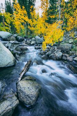 Autumn at Bishop Creek Canyon, Eastern Sierra Mountains, California by Vincent James