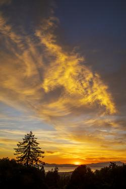 Autumn Flare - Fall Color and Tree Over Berkeley by Vincent James