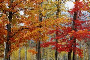 Autumn Foliage, Lincoln New Hampshire, New England by Vincent James