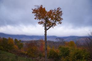 Autumn Heart Tree, New Hampshire Mountains New England Fall by Vincent James