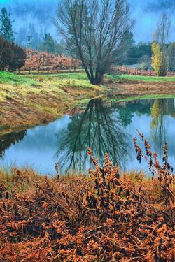 Autumn Pond Reflections, Calistoga, Napa Valley California by Vincent James