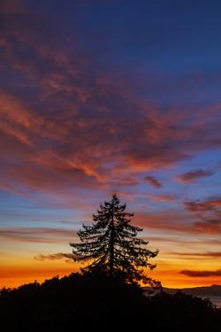 Autumn Sky - Fall Sunsets and Tree Over Berkeley by Vincent James