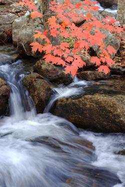 Autumn Stream II by Vincent James
