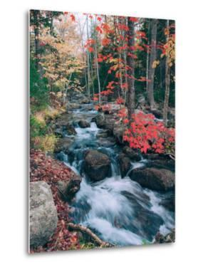 Autumn Stream Revisited, Acadia Maine Coast by Vincent James