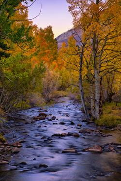 Autumn Stream View, Biship Creek Canyon Eastern Sierras by Vincent James