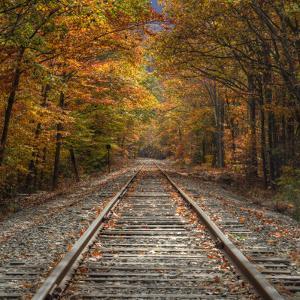 Autumn Tracks (Square), New Hampshire by Vincent James