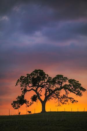 Chance Encountyers - Mount Diablo Oak Tree Farm Sunset