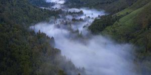 Coastal Fog Valley, Northern California Coast by Vincent James
