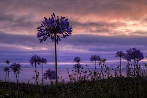 Coastal Sunset Flower Silhouettes, Montara California by Vincent James