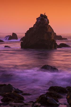 Cormorant and The Sonoma Coast Seascape by Vincent James