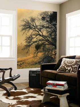 Diablo Tree Design by Vincent James