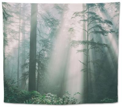 Divine Forest Light, Del Norte Coast Redwoods, Northern California by Vincent James