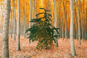 Do Your Own Thing, Northern Oregon Trees in Autumn by Vincent James