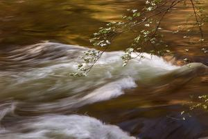 Dogwoods and Late Afternoon Light Reflected in Merced River by Vincent James