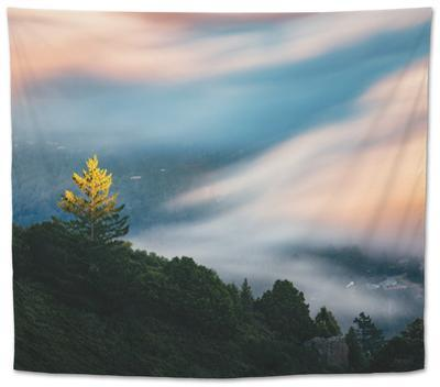 Dreamy Fog Light and Tree, Marin Mill Valley California by Vincent James
