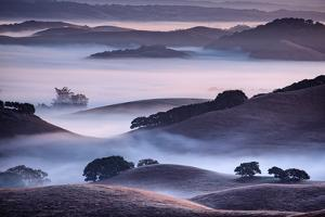 Dreamy Light and Fog, Petaluma Hills, Sonoma County, Bay Area by Vincent James