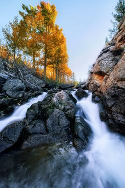Epic Fall Vision - Fall Color, Bishop Creek Canton, Eastern Sierras California by Vincent James
