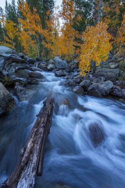 Etheral Autumn Vision - Fall Color, Bishop Creek Canton, Eastern Sierras California by Vincent James