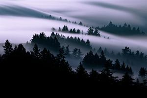 Ethereal Fog Flow Through The Trees, California Mount Tamalpais by Vincent James
