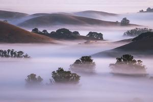 Ethereal Hills and Fog, Misty Otherworldy View at Petaluma Sonoma County by Vincent James