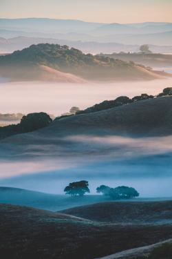 Ethereal Morning World, Misty Foggy Light, Petaluma California by Vincent James