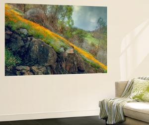 Ethereal Spring and Poppy Hillside by Vincent James